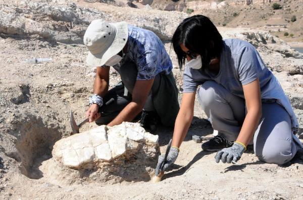 Kayseri'de 7.5 milyon yıllık fosiller: At, gergedan, fil... - Sayfa 1