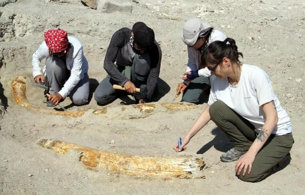 Kayseri'de 7.5 milyon yıllık fosiller: At, gergedan, fil... - Sayfa 2