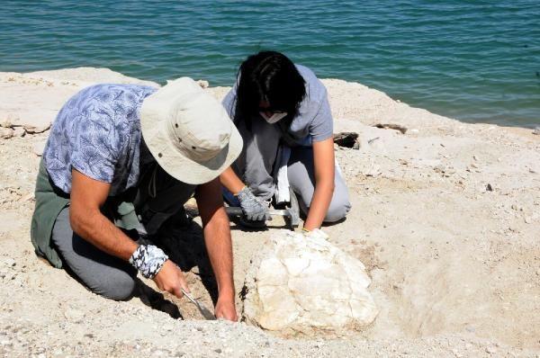 Kayseri'de 7.5 milyon yıllık fosiller: At, gergedan, fil... - Sayfa 3