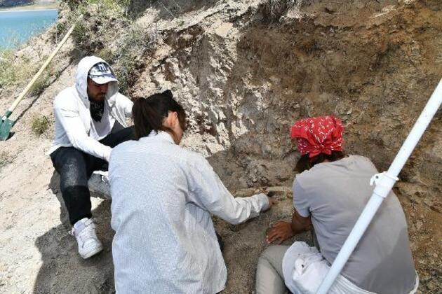 Kayseri'de 7.5 milyon yıllık fosiller: At, gergedan, fil... - Sayfa 4