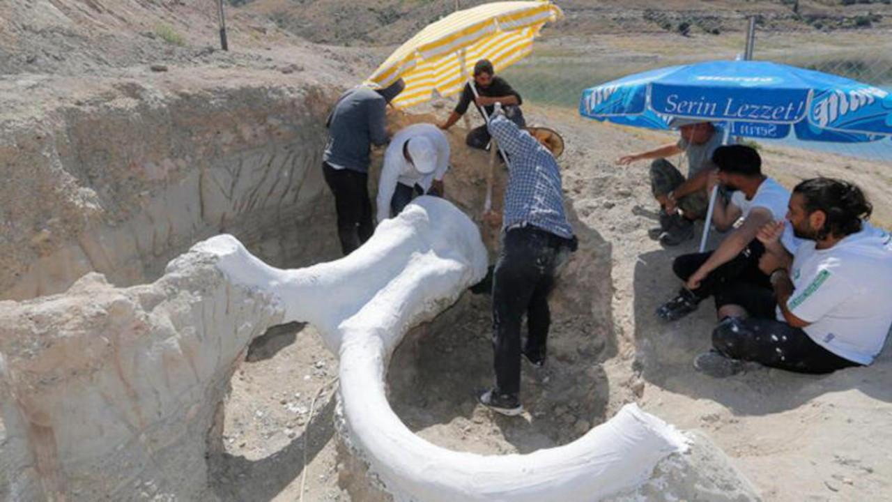 Kayseri'de 7.5 milyon yıllık fosiller: At, gergedan, fil...