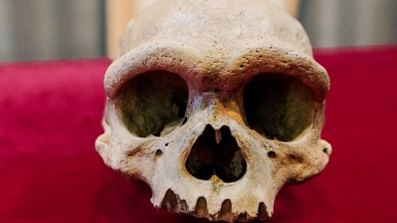 146 bin yıllık kafatası: Yeni bir insan soyuna ait olabilir