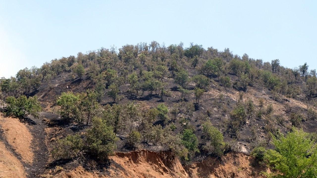Bingöl'de 2500 hektar orman yandı