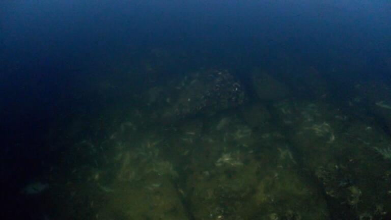 Küçükçekmece Gölü'nde yüzlerce balık ve yengeç kıyıya vurdu - Sayfa 1