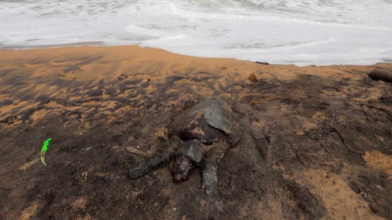 Sri Lanka'da ölü deniz hayvanları kıyıya vurdu