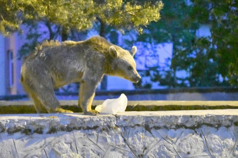Görüntülemeye çalıştığı ayı kovalayınca kaburgasını kırdı - Sayfa 2