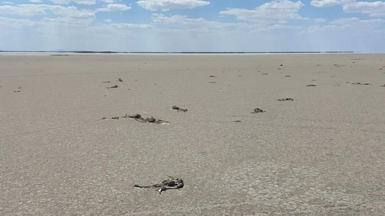 TuzGölü'ndeki flamingo ölümleriyle ilgili soruşturma başlatıldı