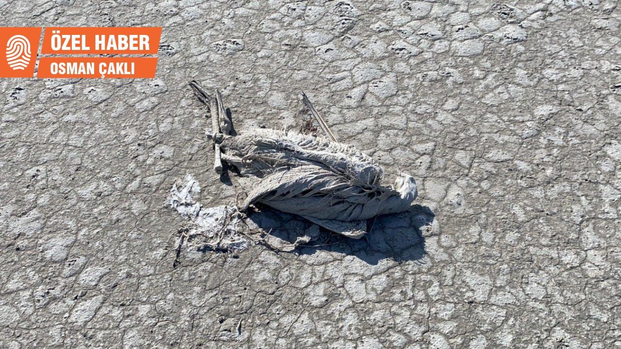 Doğa Derneği Başkanı Kılıç: Flamingo ölümlerinin sorumlusu devlet