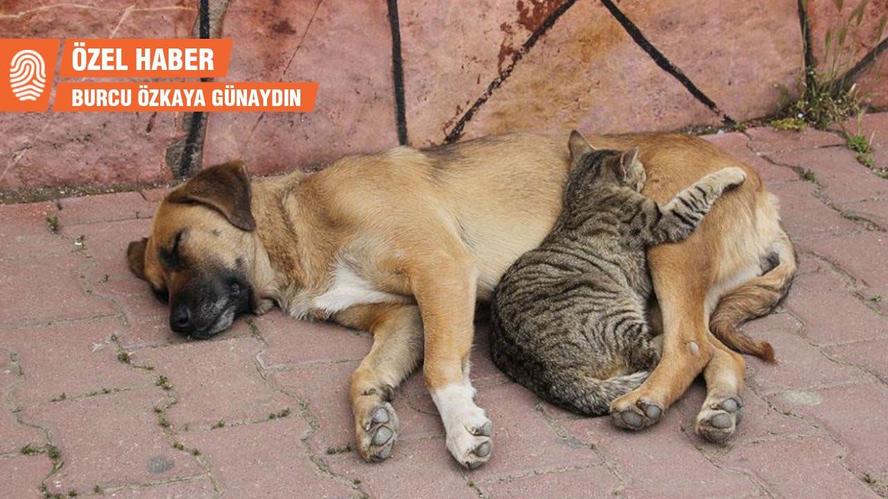 Erman Paçalı: Bir köpek katledildi, yasaya göre şikayetçi olamıyoruz