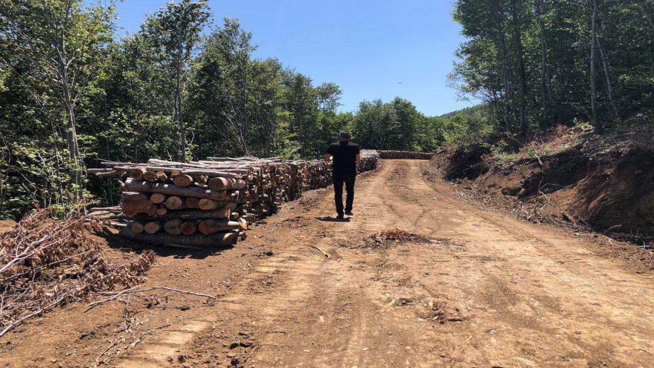 SAMÇEP: Kocadağ'da orman santral için yok ediliyor