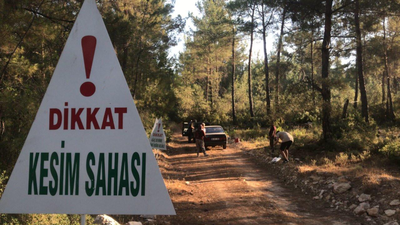 Akbelen Ormanı'nda kesim başladı, köylüler nöbet tutuyor