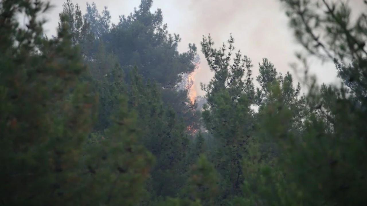 Mersin'deki orman yangınında 4 gözaltı
