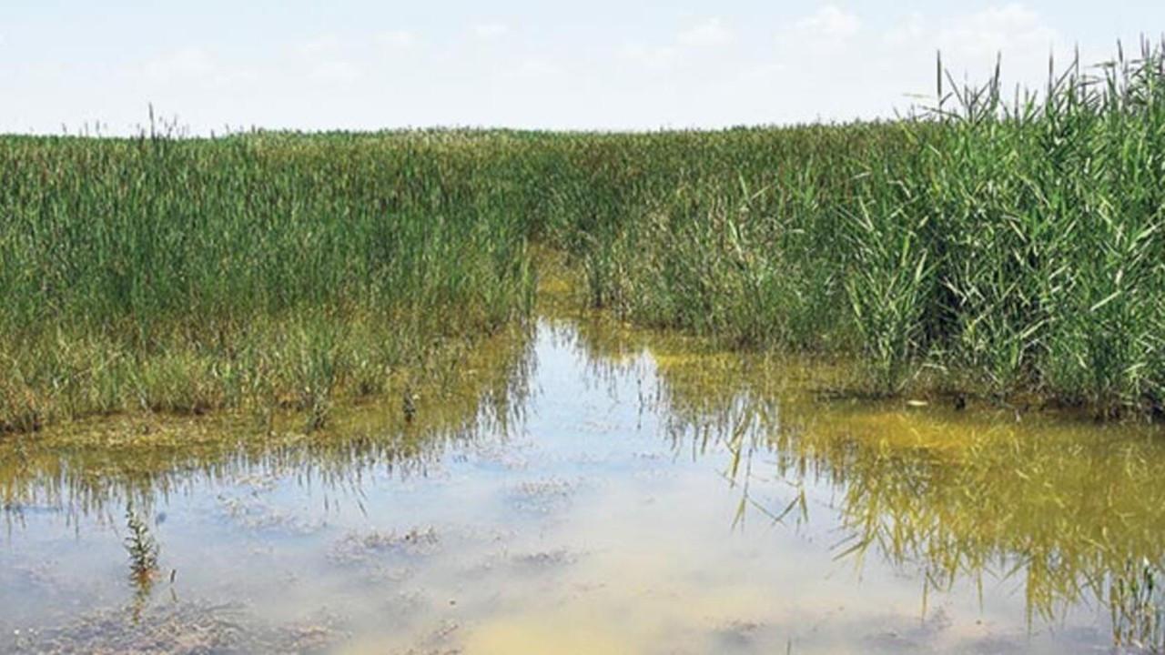 Türkiye'nin en büyük beşinci gölü olan Akşehir, gölet haline geldi