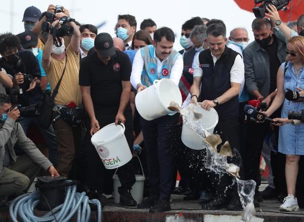 Marmara'da kalkan ve levrek formülü: İki yıl avlanılmasın - Sayfa 2