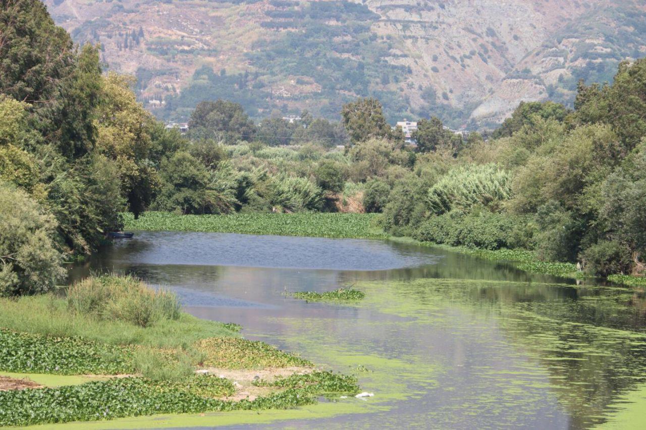İstilacı su sümbülleri Asi Nehri'nin bazı bölümlerini kapladı - Sayfa 3