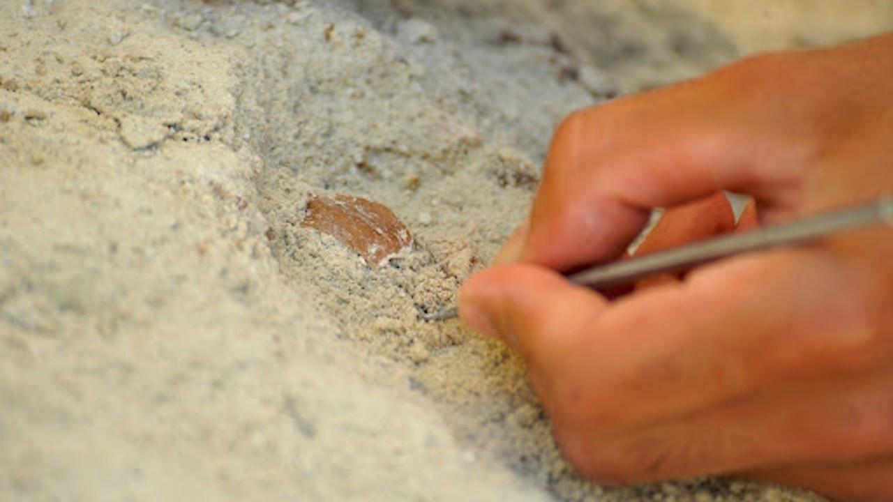 Çobanın keşfettiği mağarada binlerce yıllık 'peynir tatlısı' bulundu