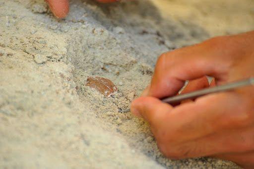 Çobanın keşfettiği mağarada binlerce yıllık 'peynir tatlısı' bulundu - Sayfa 3