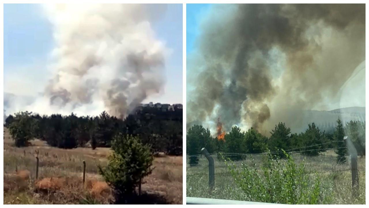 Atatürk Orman Çiftliği arazisinde yangın çıktı