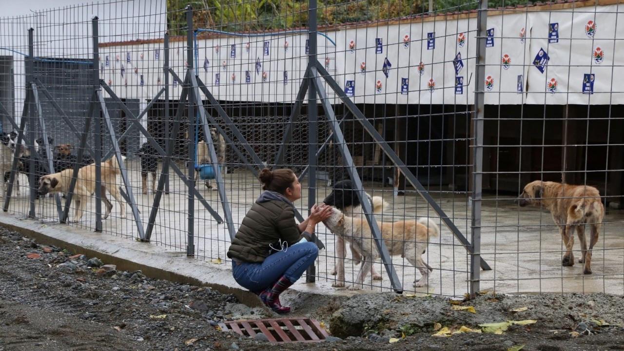 Artvin'deki selde hayvan barınağını su bastı: 20 köpek boğuldu