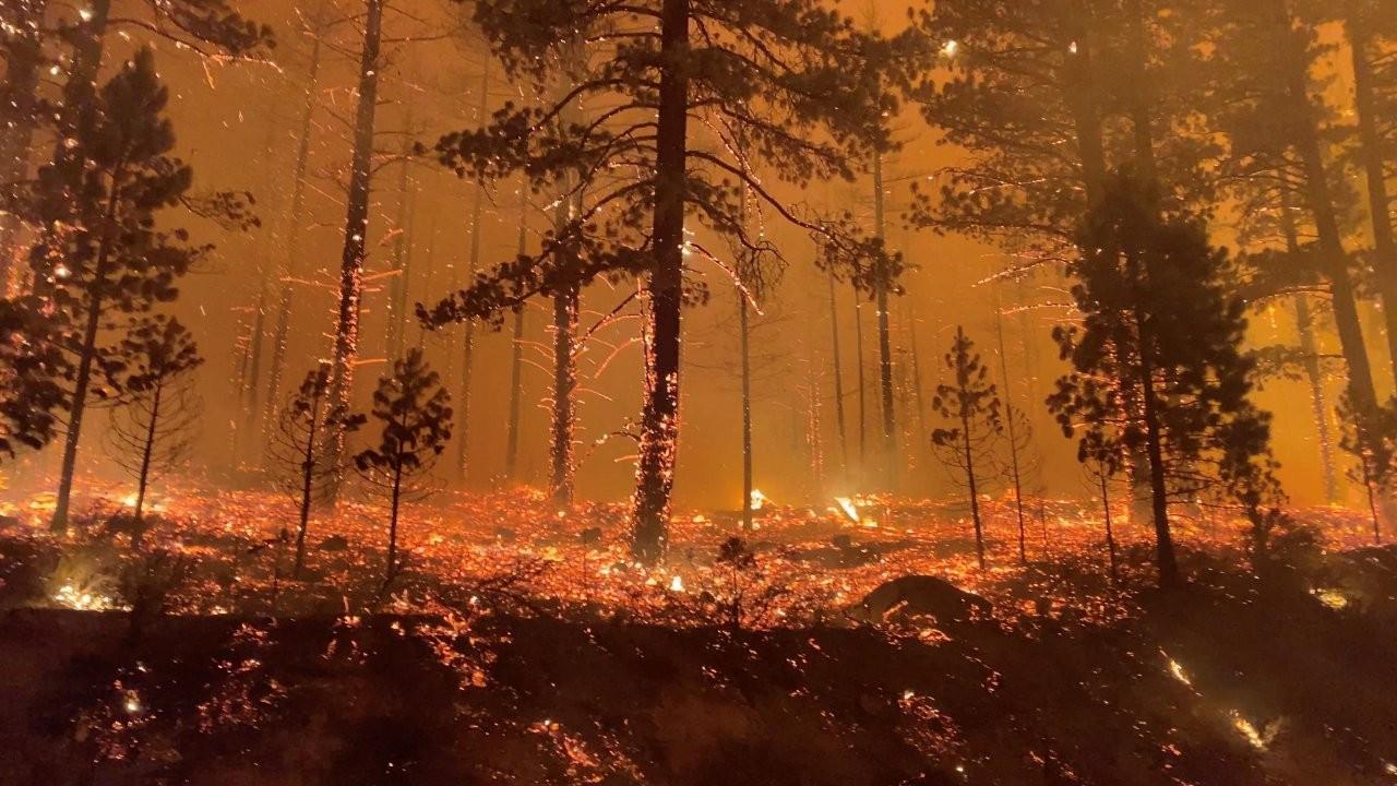 Kaliforniya'daki orman yangını evlere sıçradı