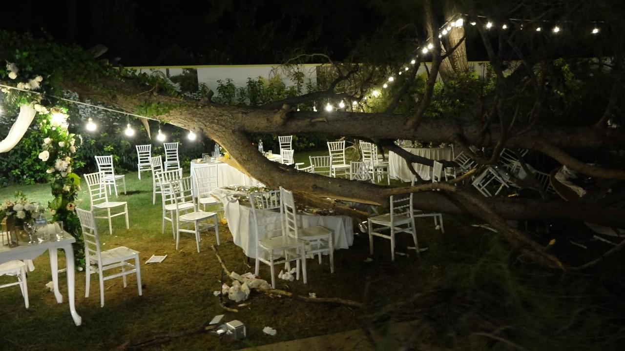 Kır düğününde ağaç devrildi: 2'si ağır 10 yaralı