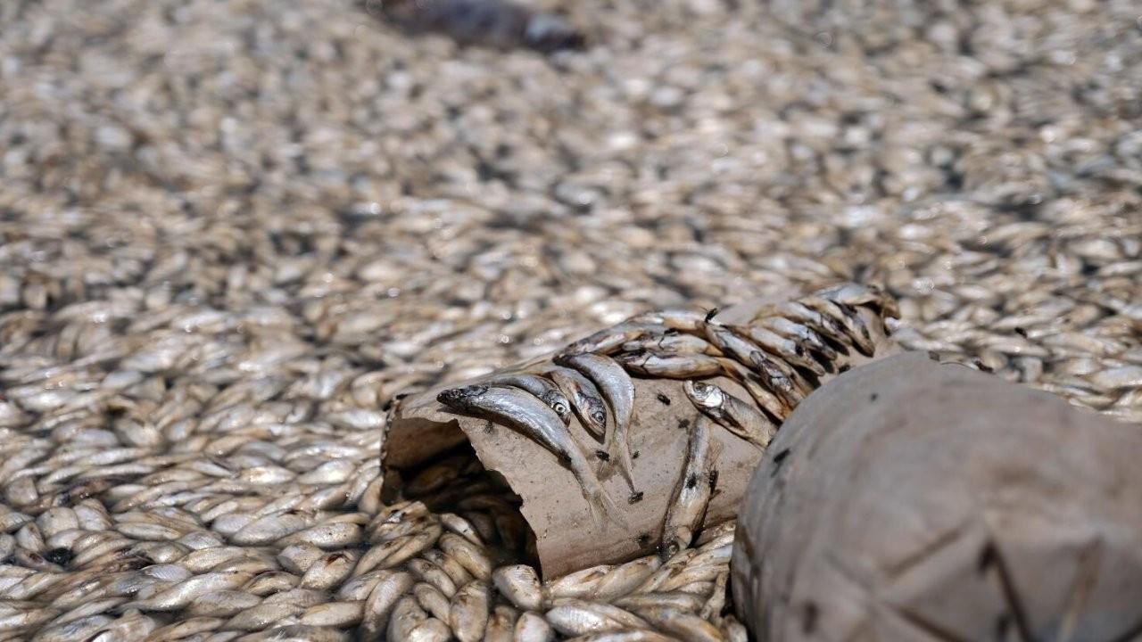 Konya'da binlerce balık oksijensizlikten öldü