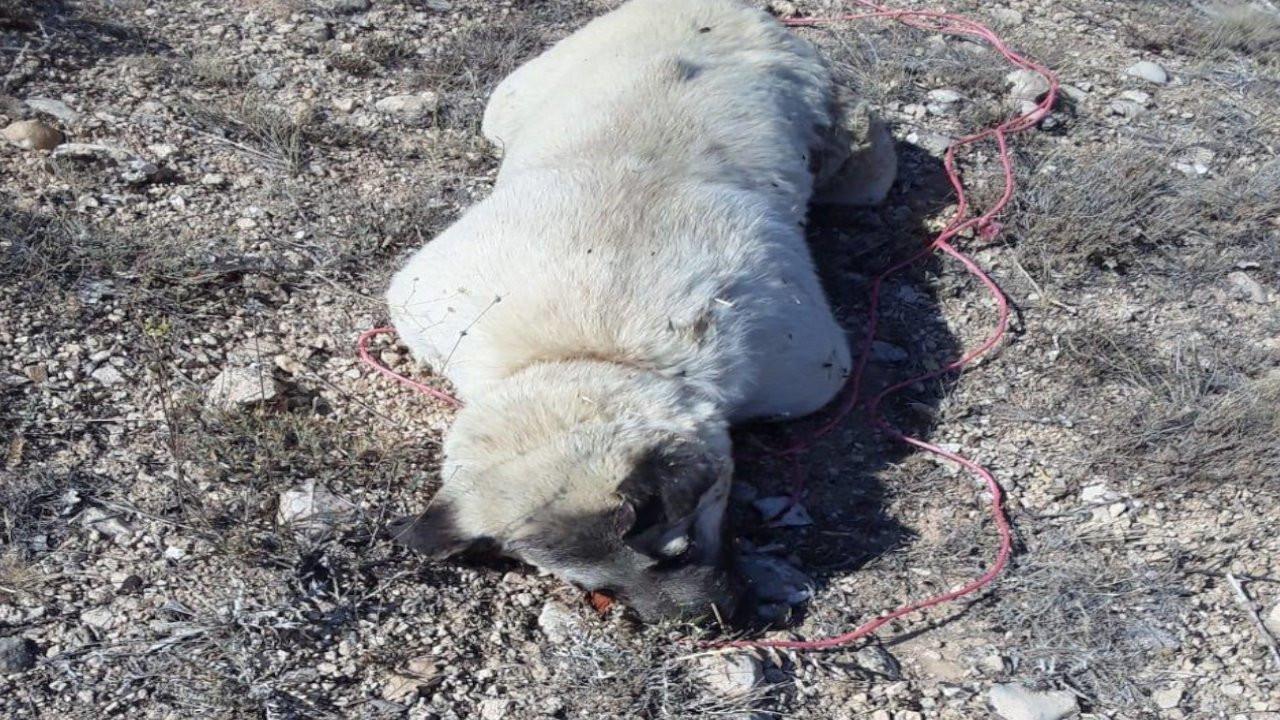Karaman'da zehirlenen köpekler öldü