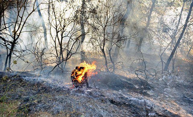 Manavgat, Fethiye, Hatay, Uşak, Bodrum... Orman yangınlarında son durumlar - Sayfa 2