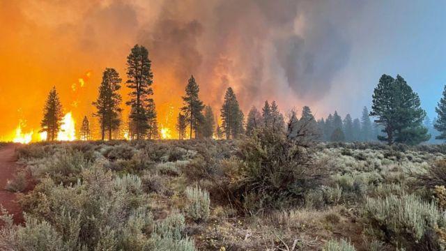 Manavgat, Fethiye, Hatay, Uşak, Bodrum... Orman yangınlarında son durumlar - Sayfa 1