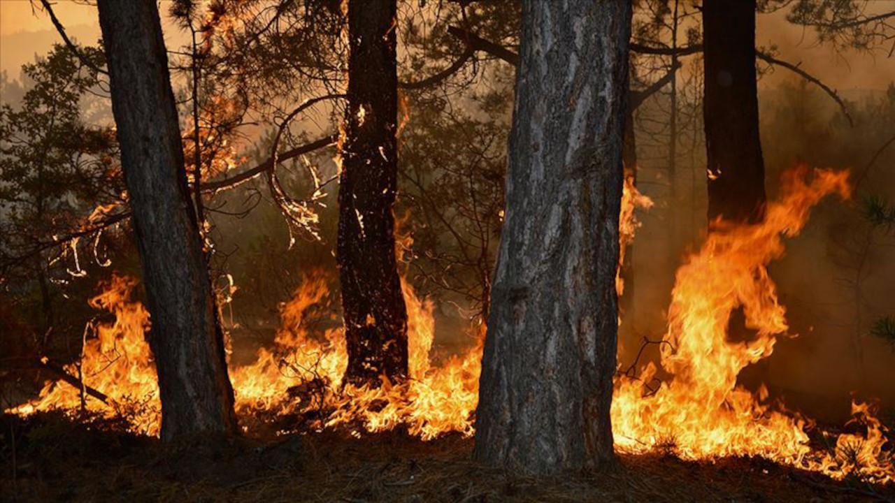 Yangınlar sönmeden orman ve kıyılar yeni yağmaya açılıyor