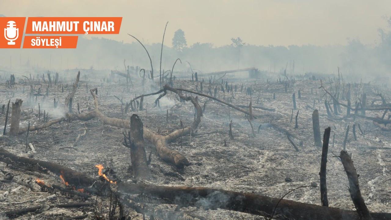 Ağaçlar yangında ölmüyor: İnsanlarla konuştuklarını duymak mümkün