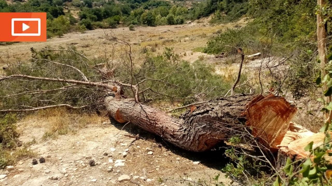 Akbelen'de bu kez de yangın önleme bahanesiyle ağaç kesimi