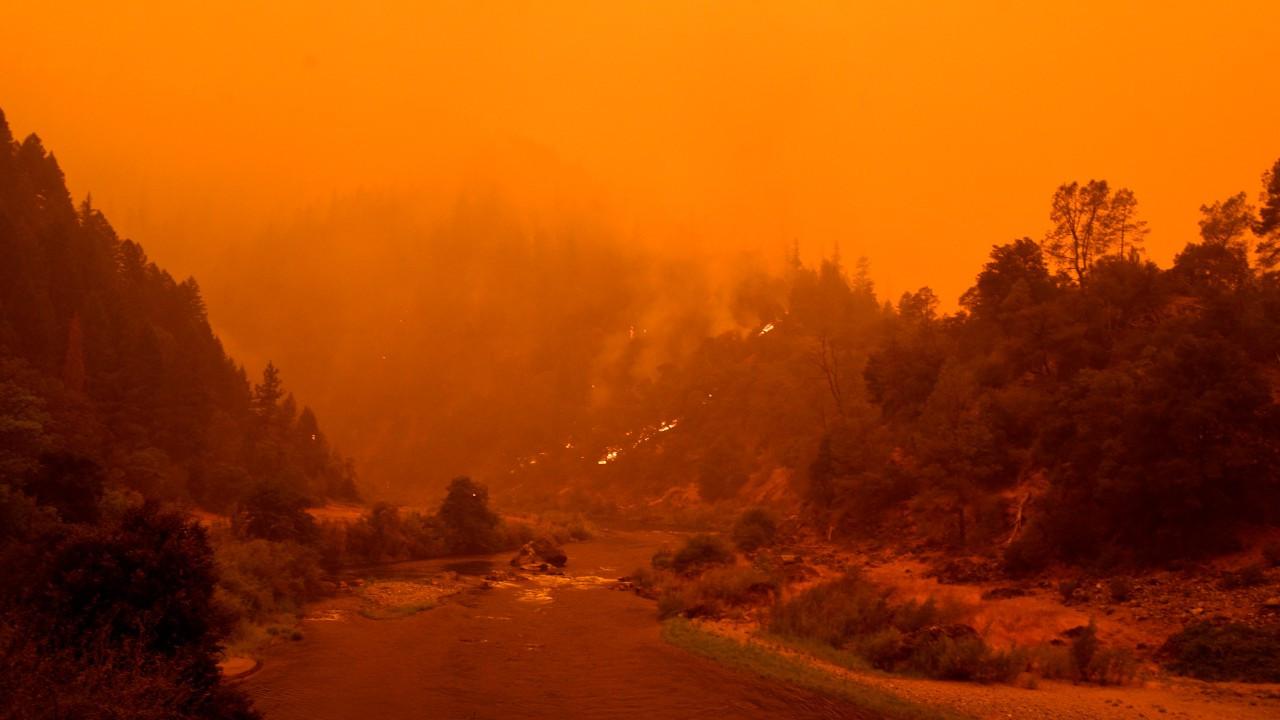 Kaliforniya yangınında yaklaşık 200 bin hektar orman yok oldu
