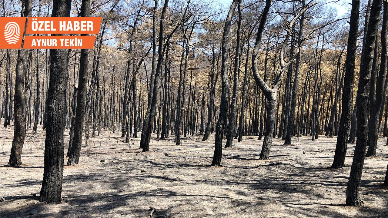 'Ormanı ekosistem değil arsa olarak gören bakış açısı değişmeli'
