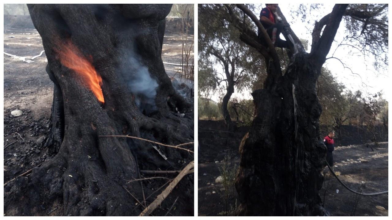 Demir kesme makinesi 60 yıllık ağaçları yaktı