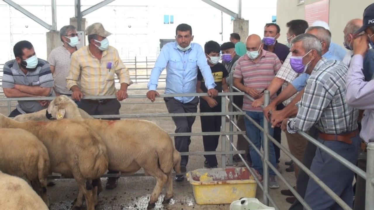 Üretici: Bakanlık hastalıklı hayvan dağıttı