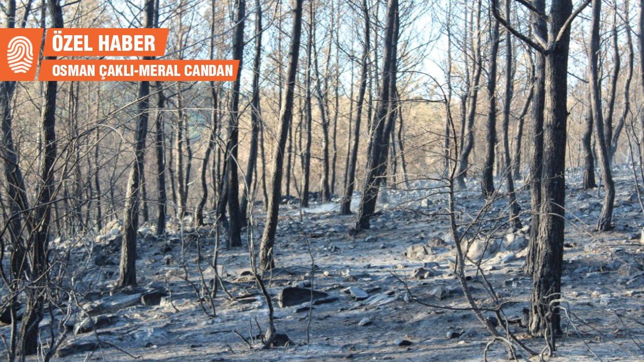 Fesleğen Köyü: Yangın söndürülebilirdi, Bozalan bile yanmazdı