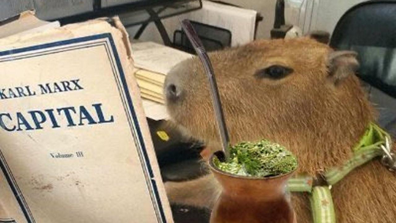 Kapibaralar Arjantinlilere sınıf savaşını öğretiyor