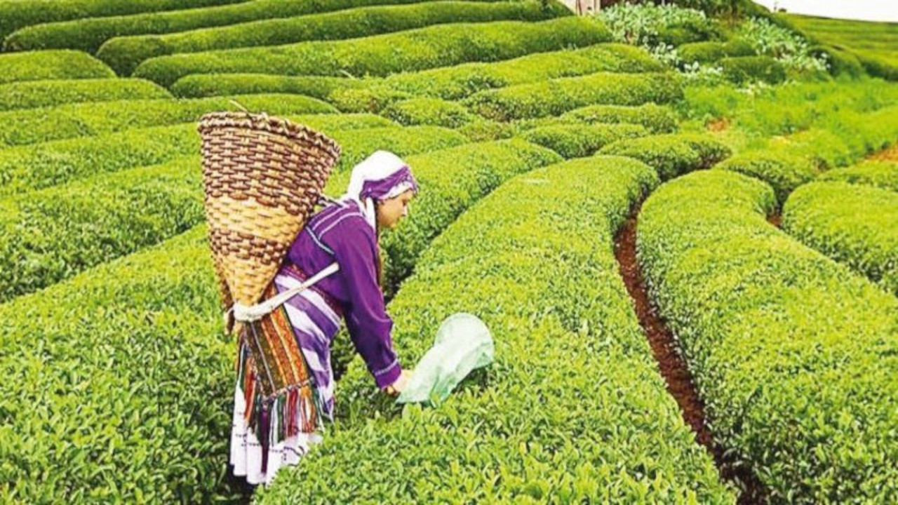 CHP'den 'Çay Kanunu' teklifi