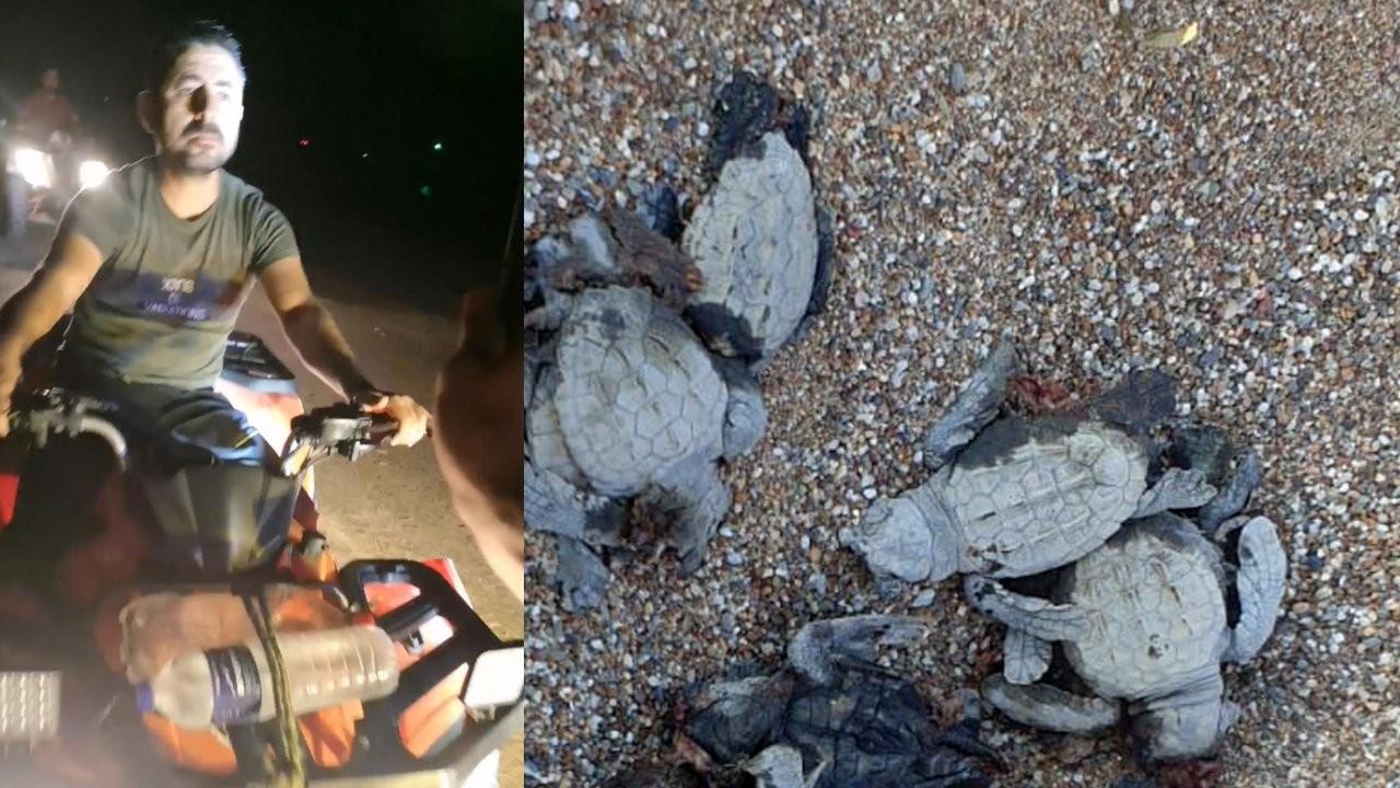 ATV'lerle caretta caretta yavrularını ezip, gönüllüyü yaraladılar