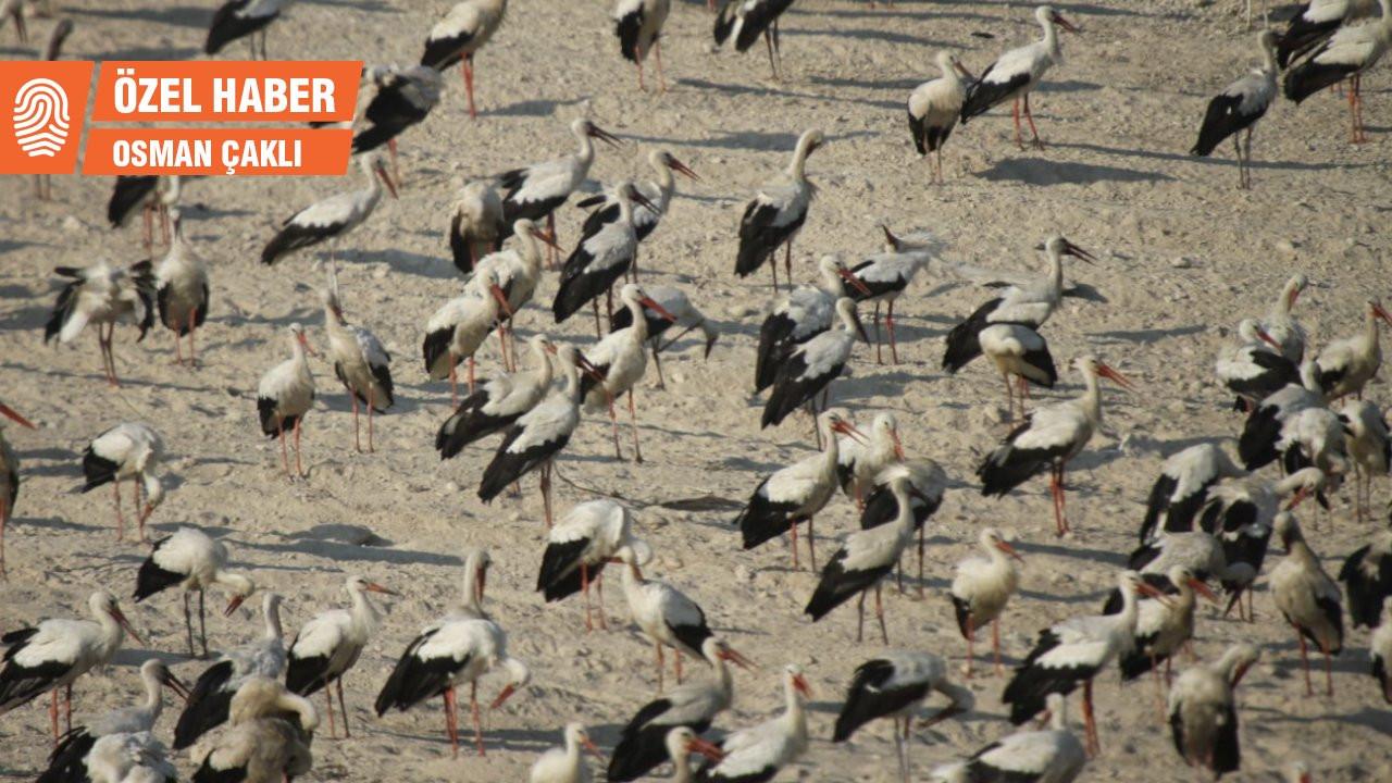 Mersin'de göç eden leylekler için nöbet