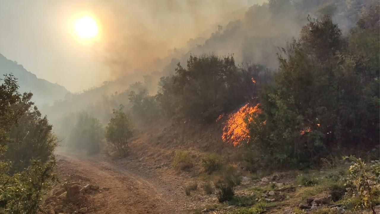 Bitlis'teki orman yangını kontrol altına alındı