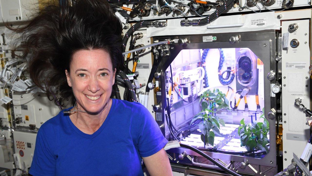 Astronot Megan McArthur: Biber fideleri çiçek açtı