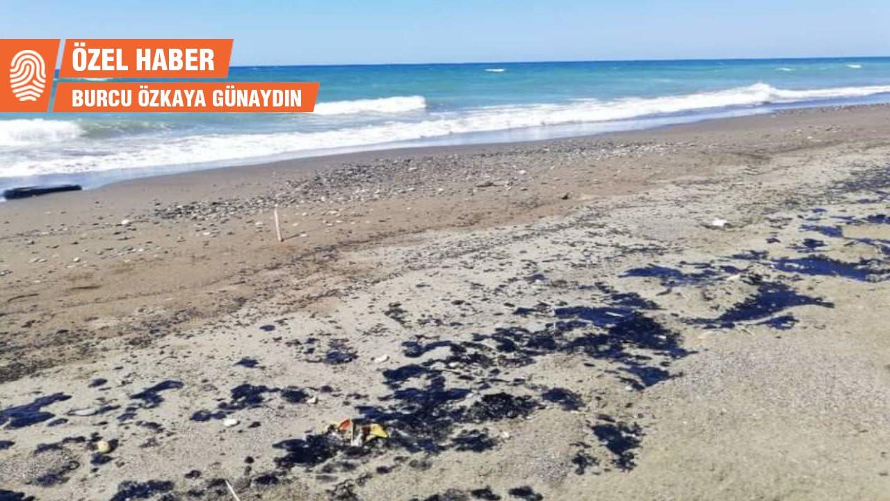 Biyolog Kayıkçı: Samandağ'da petrol tehlikesi geçmedi