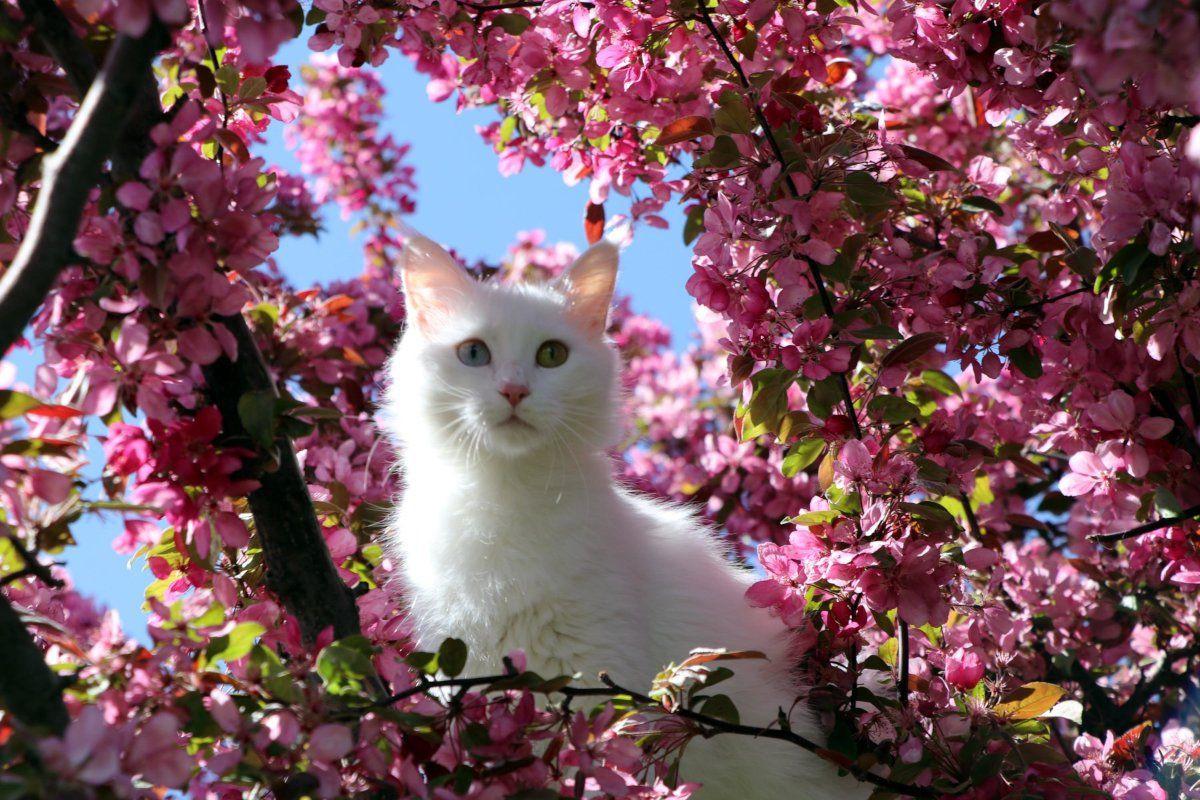 Helsinki Üniversitesi'nin araştırmasına tepki: Van kedisi en saldırgan değil en zeki kedidir - Sayfa 1