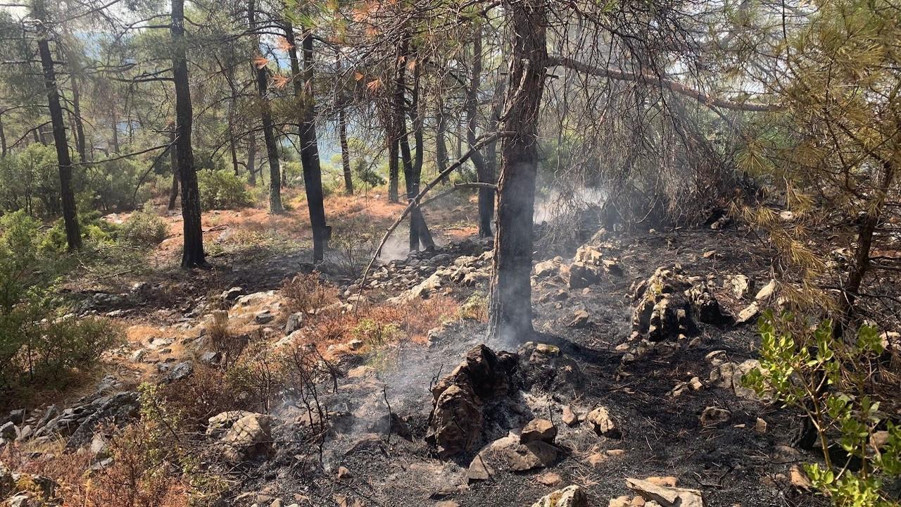Muğla'da 13 ayrı noktada orman yangını
