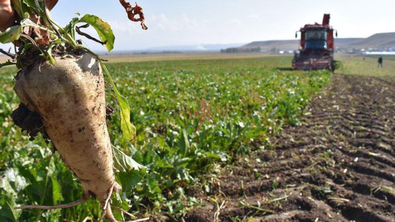 Şeker pancarı üreticileri taban fiyatın açıklanmasını bekliyor