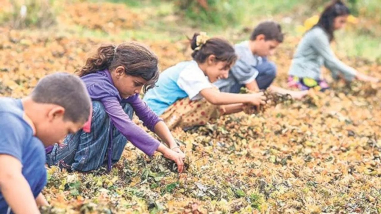Rengârenk Umutlar Derneği: Pandemide çocuk işçi sayısı arttı