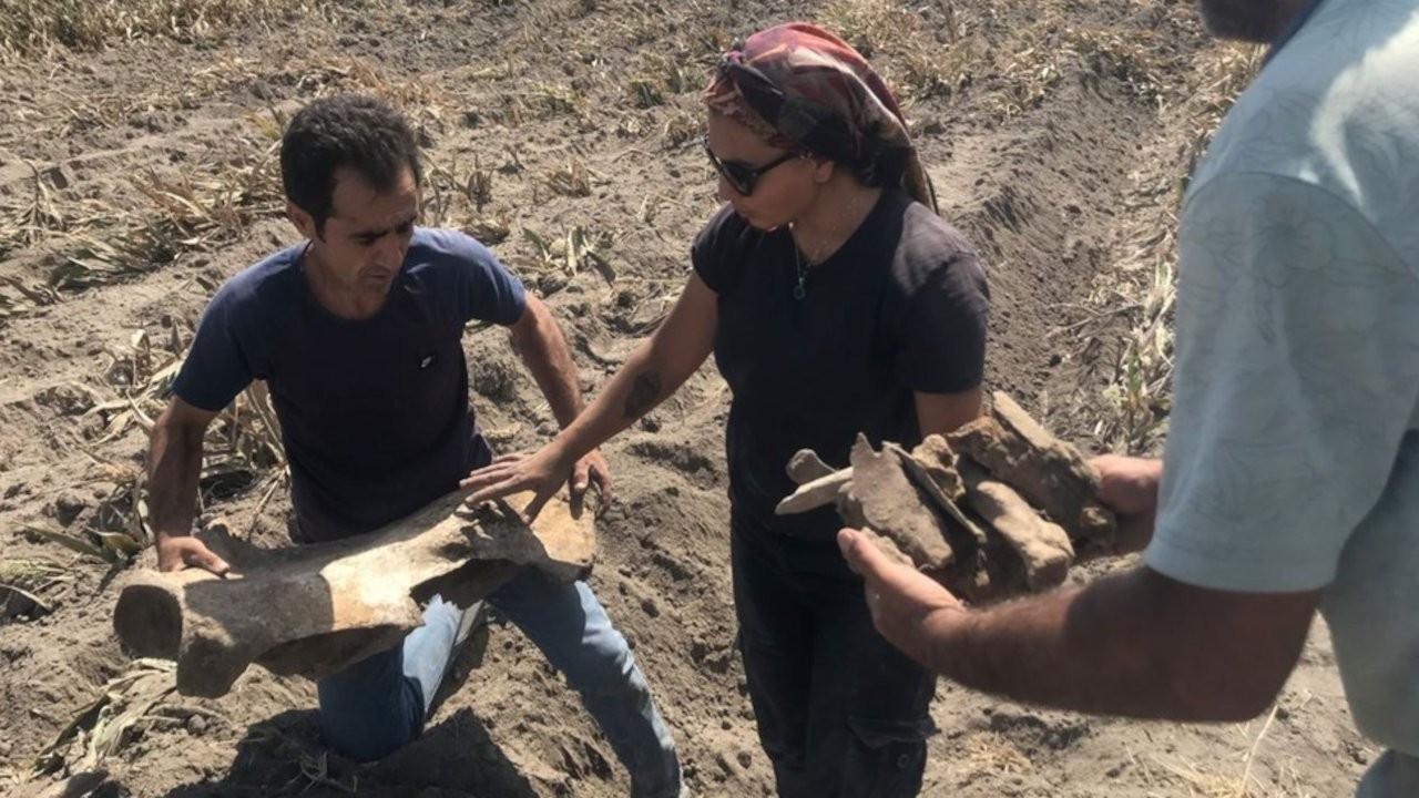 Maraş'ta tarla süren çiftçi fil fosili buldu