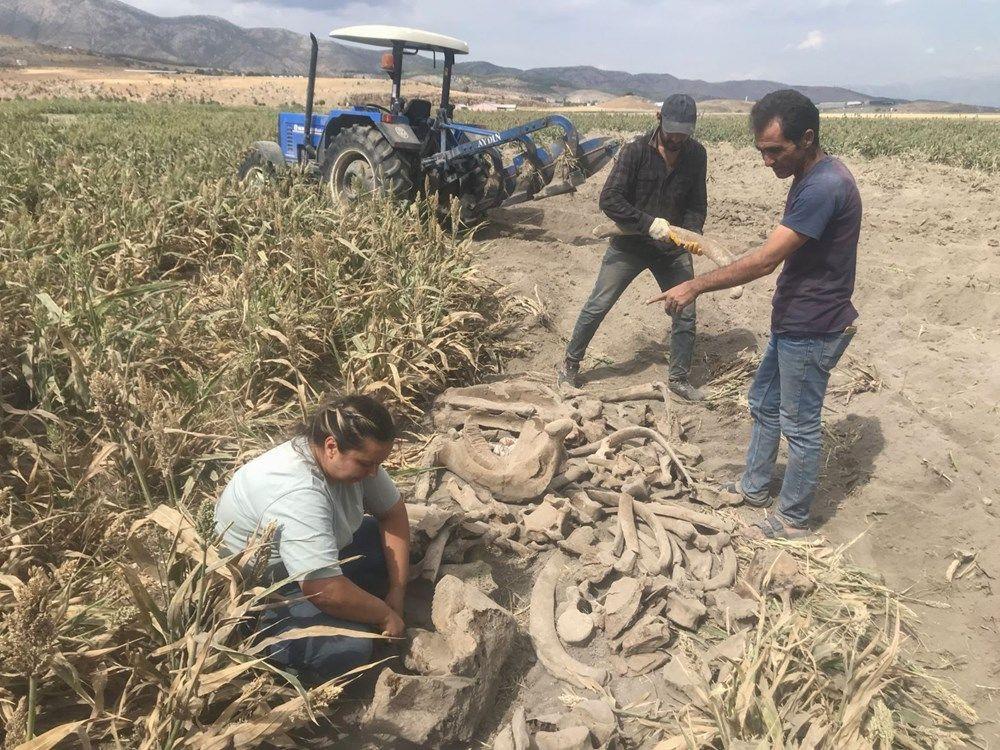 Maraş'ta tarla süren çiftçi fil fosili buldu - Sayfa 3